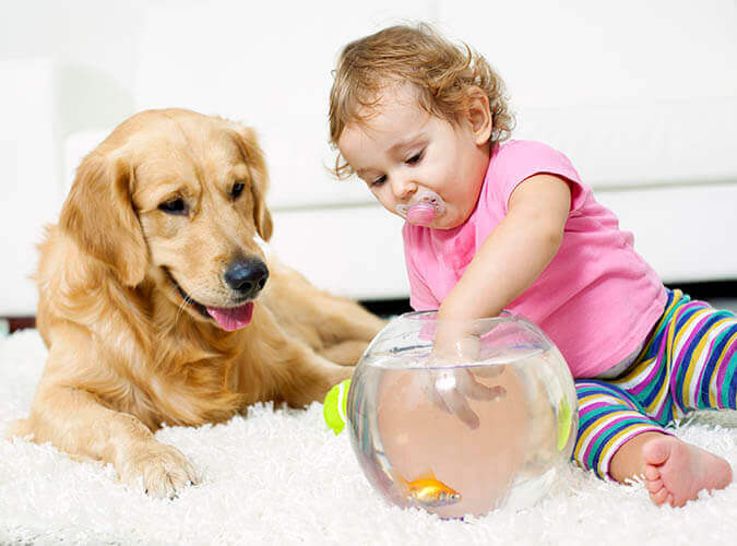 carpet cleaning safe for kids and pets Bay area