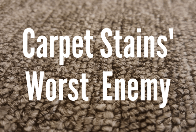 Carpet Stains' Worst Enemy