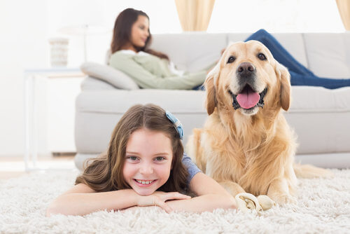 pet stain removal san francisco