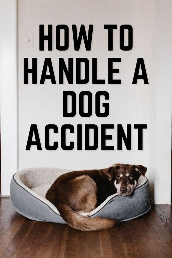 How to Handle A Dog Accident