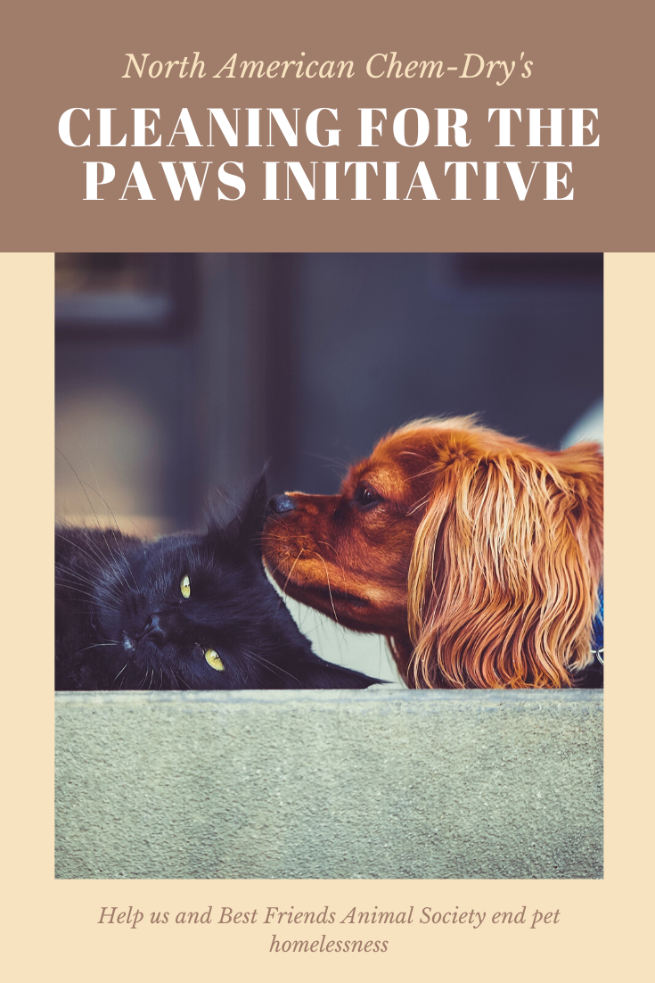Cleaning for the PAWS initiative invitation