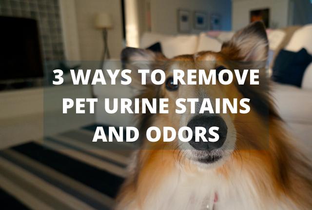 Get Rid of Pet Urine & Odors