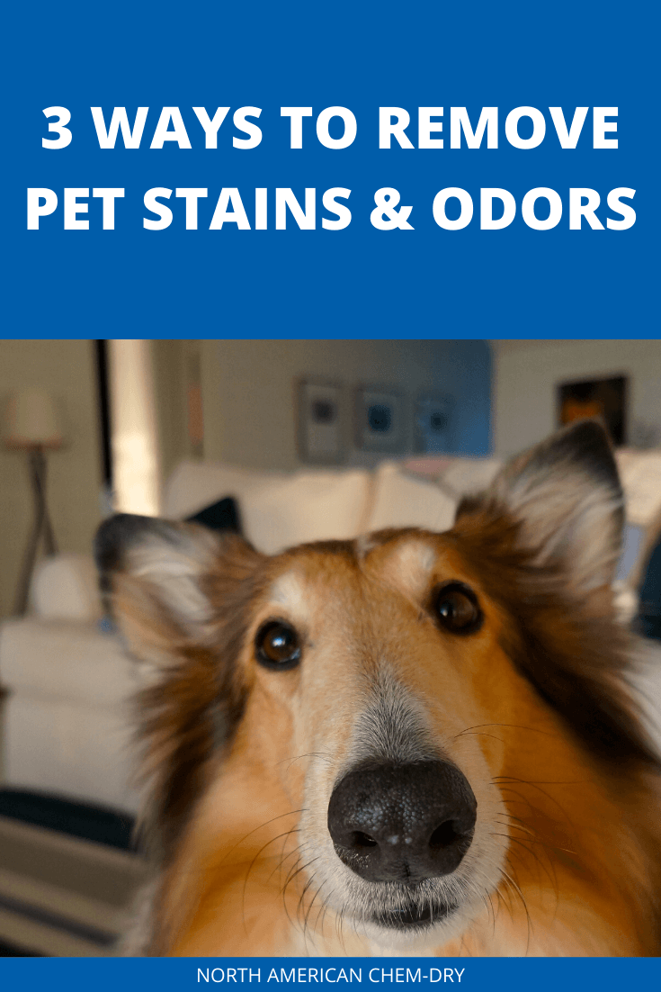 remove pet stains and odor in san francisco with North American Chem-Dry
