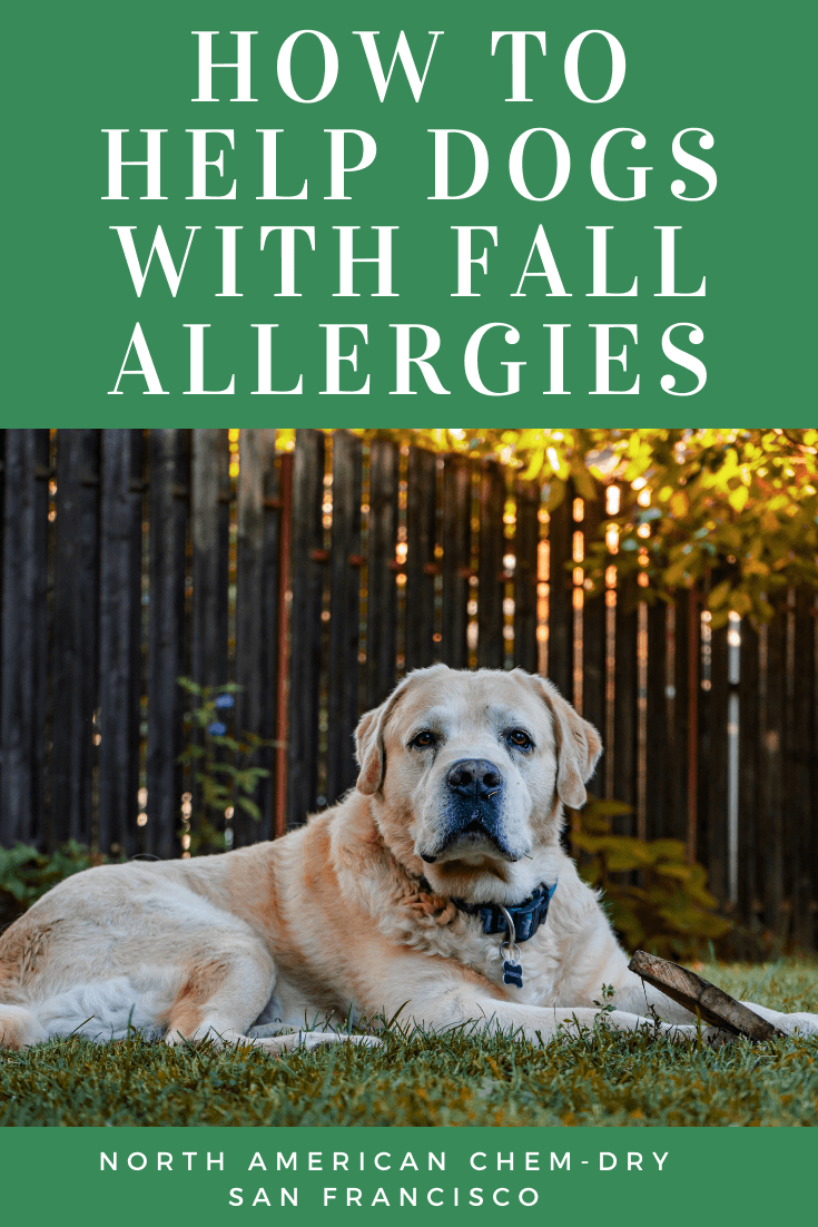 how to help dogs deal with seasonal allergies
