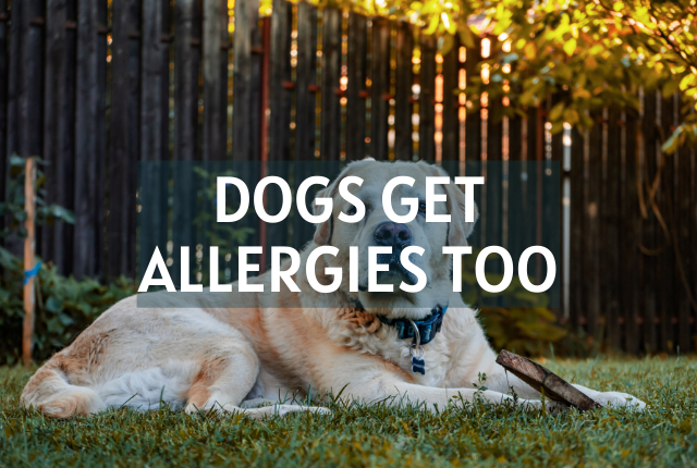 Dogs Have Allergies Too