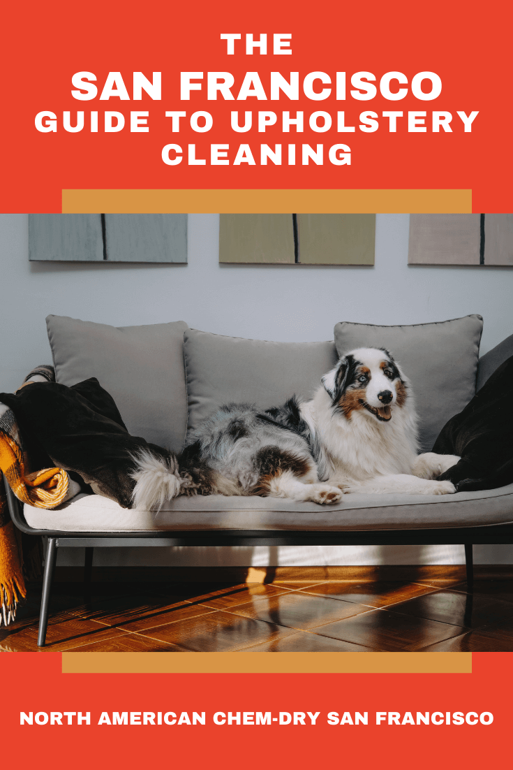 a dog sitting on a couch after a furniture cleaning in san francisco